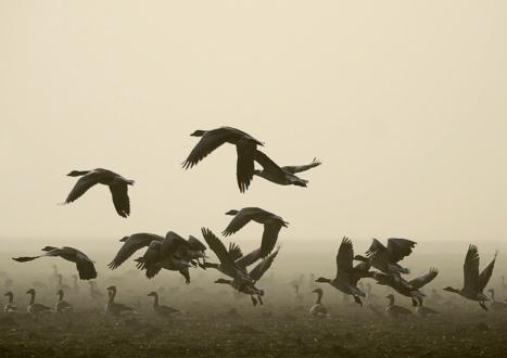 Pejzaże we mgle